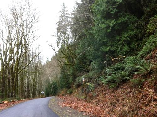 Olympic Discovery Trail near the Elwha River Bridge
